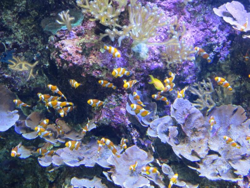 san-sebastian-aquarium-10