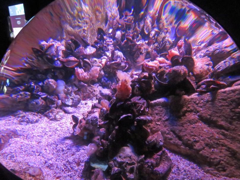 san-sebastian-aquarium-3