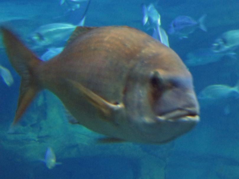 san-sebastian-aquarium-5