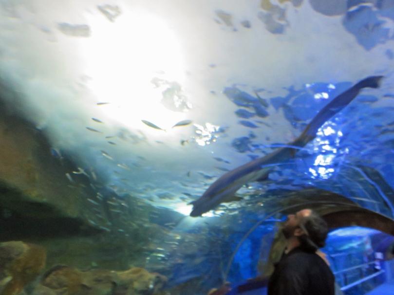 san-sebastian-aquarium-6
