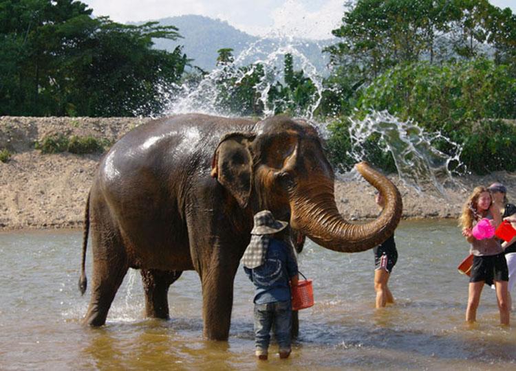 elephant-nature-park-2